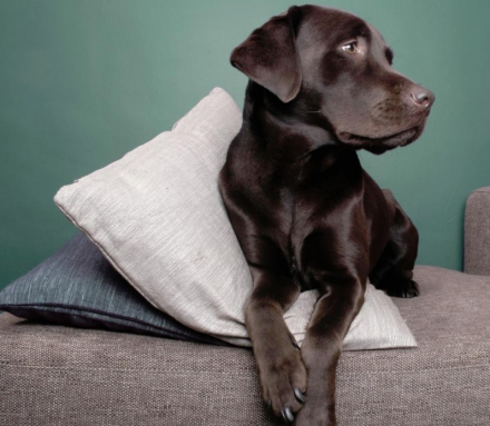 Can You Keep Your Pets Comfortable and Save Money?
