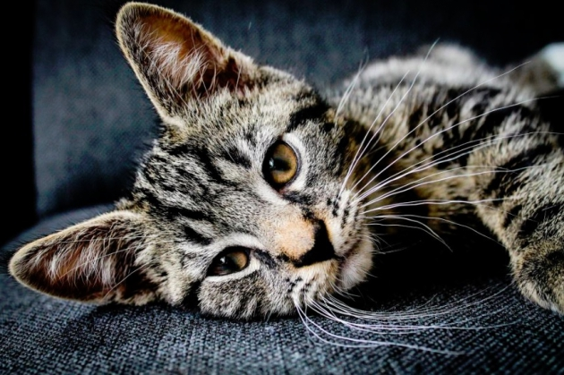 How to Use Your HVAC System with Pets