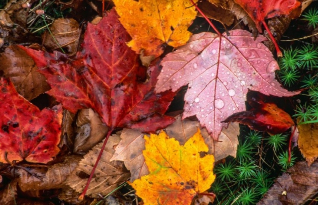 6 Tips to Prepare Your Home for Fall