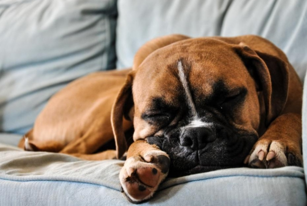 Can Pets Raise Your HVAC Energy Bills?