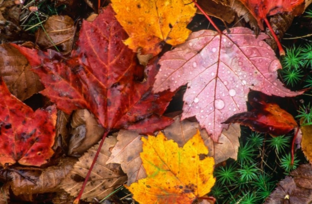 3 Ways to Use Your HVAC System to Combat Fall Allergies